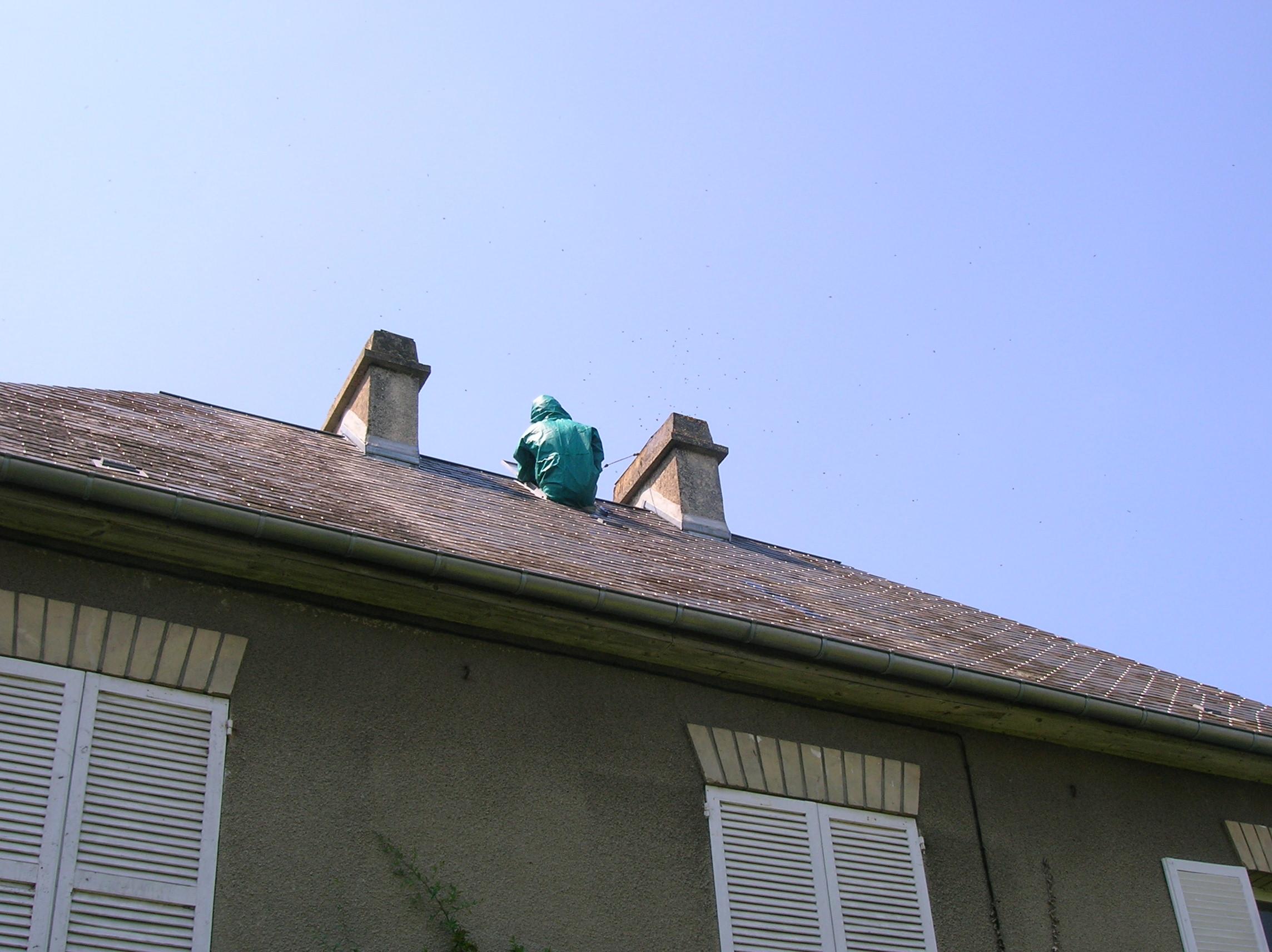 Detruire nid de guepe sous toiture nuallez surtout pas for Nid d oiseau sous toiture