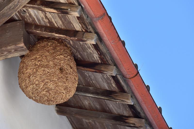 nid de frelons asiatique a caen dans le calvados